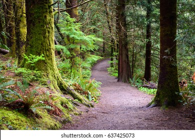 Trail through Forest at Lewis and Clark National and State Historical Parks