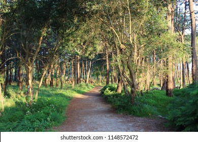 Trail through the forest in the morning