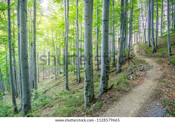 Trail through Forest on the Slopes of Medvednica Mountain - Zagreb, Croatia