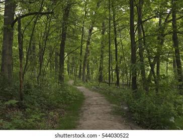 Trail through the forest at Quaking Bog, Theodore Wirth Park, Minneapolis, Minnesota