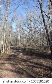 Trail through Lee Tartt Nature Preserve in Grenada Mississippi