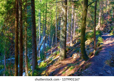 trail through lush green forest in the bavarian forest