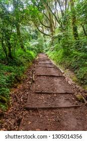 Trail through lush rainforest