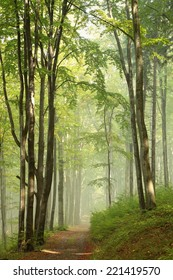 Trail through misty autumn forest in the sunshine.