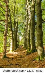 Trail through National Park Posbank Veluwe in Gelderland, Netherlands