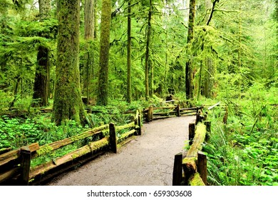 Trail through old growth forest at Cathedral Grove, Vancouver Island, BC, Canada