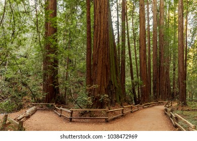 Trail through redwoods in Muir Woods National Monument near San Francisco, California, USA