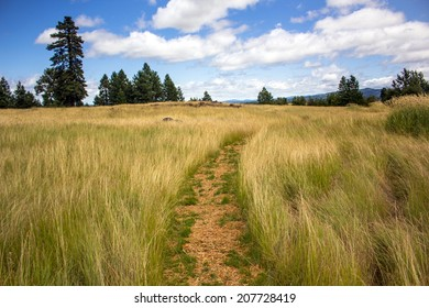 A trail through a scenic grassland area in the Pacific Northwest