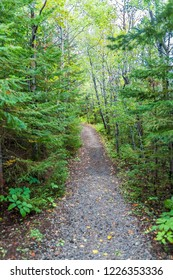 Trail Through the Wilderness in Saguenay, Quebec, Canada