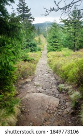 A trail through the woods in the Izera Mountains, with Mt Wysoki Kamien visible in the background, Western Sudetes, Poland