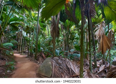 Trail at the unesco reserve of vallee de mai in praslin seychelles