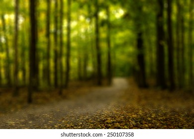 Trail View in Colorful Autumn Forest with a Blurry Filter Effect