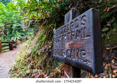 A Trail Walk In Big Sur. Buzzard's Roost Trail Is A Beautiful National Park Hiking Track In California