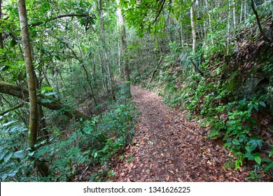 Trail winding through the Guajataca Forest Reserve of Puerto Rico