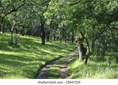 Trail winding through the trees in the spring