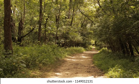 A trail in the woods at Tom Sawyer State Park