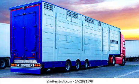 A trailer animal transport . Special truck and trailer for transportation of pigs . Transport of live animals .