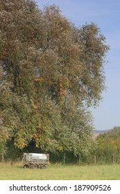 trailer based cattle watering tank under a willow tree