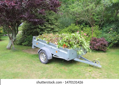 Trailer full of garden waste after trimming hedges