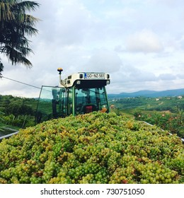 A trailer with grapes after harvesting.