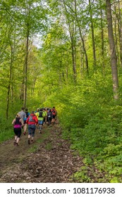 Trailrunning through a forest at beautiful sunshine at the harz mountains