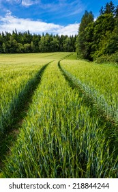 Trails in growing rye field, Agricultural Background