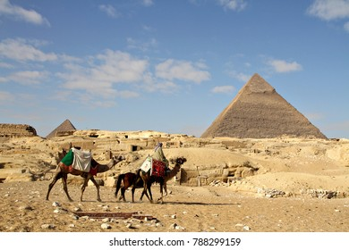 A train of camels walks through the desert past the Pyramids of Giza in Cairo, Egypt.