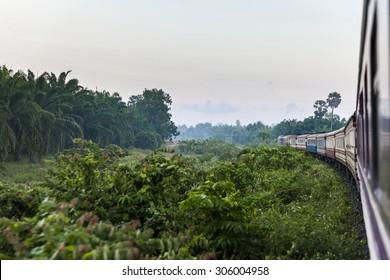 Train going through tropical jungle scene at dawn