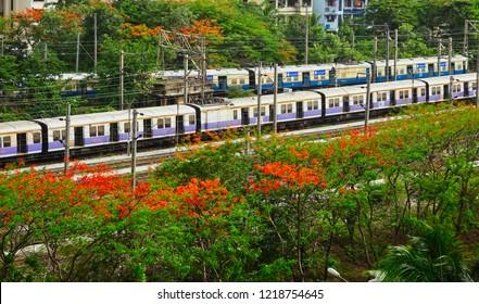 Train near vashi railway station going towards san pada station in mumbai surrounded by trees and shrubs