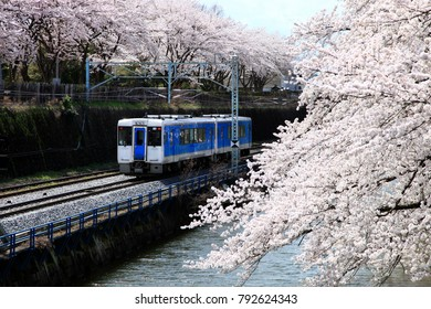 Train and row of Cherry blossoms or sakura along the castle moat in Kajo park, Yamagata prefecture, Japan