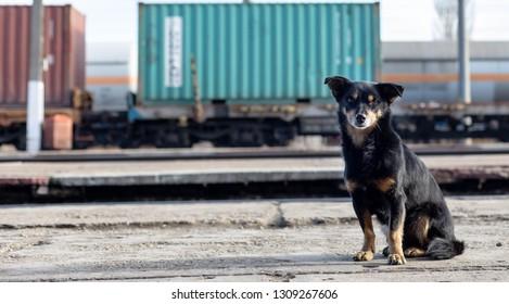 train station watchdog