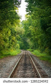 Train tracks through the thick forest of Ohio's only National Park, Cuyahoga Valley.