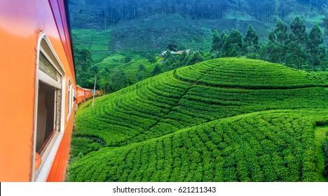 Train travels through the tea plantation at Hatton, Sri Lanka