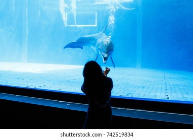 Trainer showing docile dolphin in blue aquarium