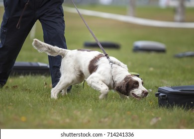 Training a dog