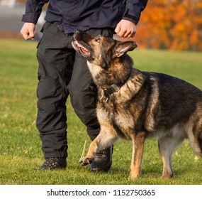 Training a police dog