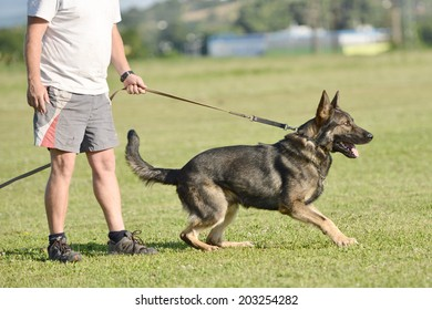 training of a police dog