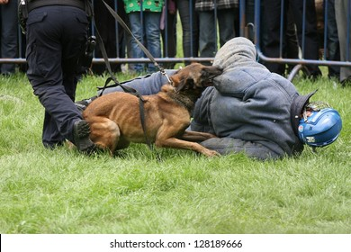 Training a police dog, the moment of the attack on the ground.