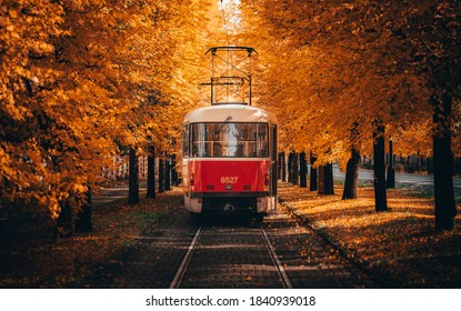 Tram going through corridor of trees in autumn. - Shutterstock ID 1840939018
