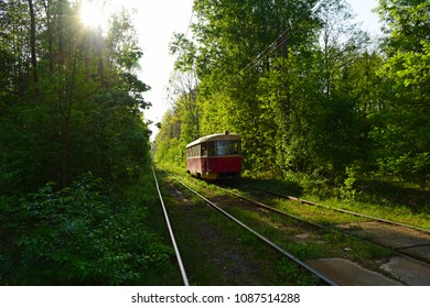 Tram rides in the forest green. Transport in nature in summer