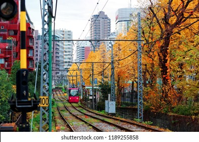 A tramcar travels on the rail of Toden Arakawa Line (Tokyo Sakura Tram ) by a row of Ginkgo trees ( Gingko, Maidenhair) with leaves turning into golden color in the autumn season in Tokyo, Japan