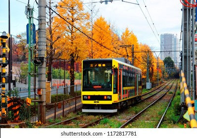 A tramcar travels on the railway of Toden Arakawa Line by a row of Ginkgo trees ( Gingko, Maidenhair) with leaves turning into golden color in the beautiful autumn season in Tokyo, Japan