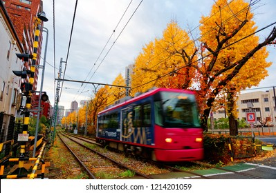 A tramcar travels on the tracks of Toden Arakawa Line by a row of Ginkgo trees ( Gingko, Maidenhair) with leaves turning into golden color in the beautiful autumn season in Tokyo, Japan