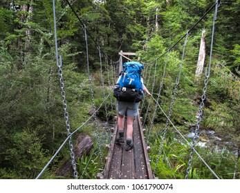 Trampers walk across a swing bridge over a stream in the bush in the Nelson Lakes regional park in New Zealand