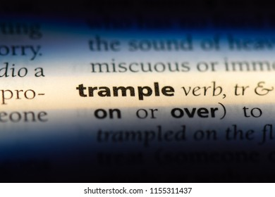 trample word in a dictionary. trample concept.