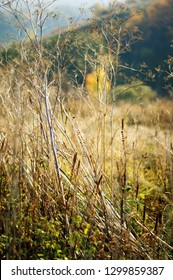 Trampled dry grass in the meadow in autumn