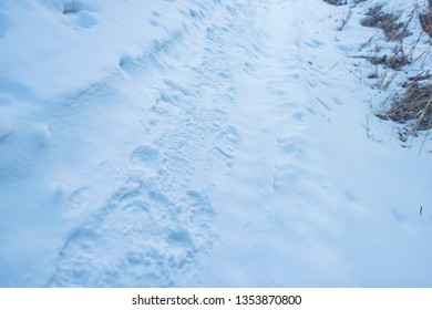 Trampled on the snow. Footprints in the snow. Traces of animals in the snow.