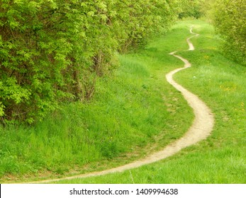 Trampled path passing through the green grassy terrain between trees and shrubs