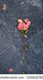 trampled pink rose on the granite floor.