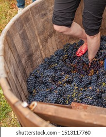 trampling of grapes according to the ancient traditional method in a wooden barrel